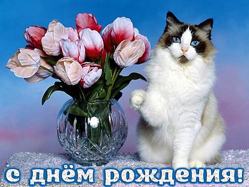Нажмите на изображение для увеличения.  Название:Открытка с Днем Рождения, животные, кот и букет тюльп.jpg Просмотров:21 Размер:194.3 Кб ID:10388